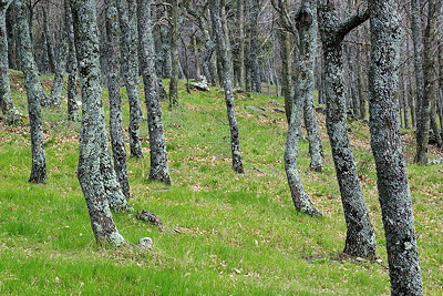 Provence forest at springtime