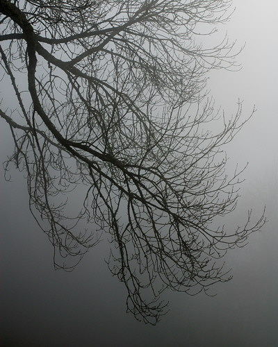 Branches in the mist