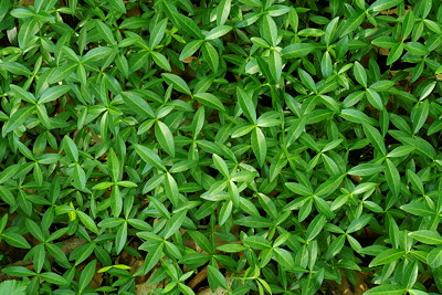 Closeup of green plants growing on forest ground at springtime