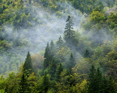 Photo of some mist arriving in Valserine forest
