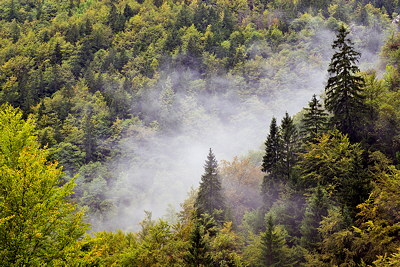Photo of some beautiful mist between the trees of Valserine forest