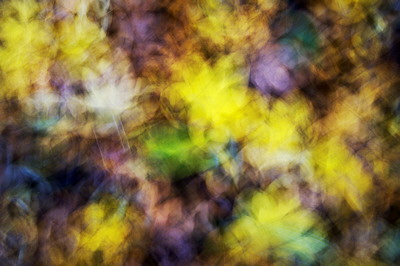 Abstract image of some autumn leaves on the ground