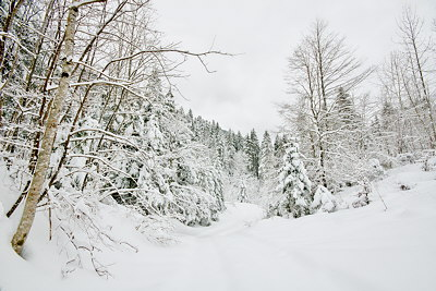 Photograph on Valserine valley under the snow in Haut Jura Natural Park - France