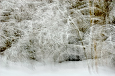 Photograph of a snowstorm in Valserine forest