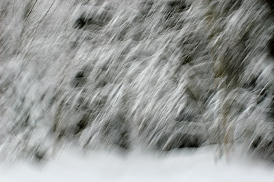 Abstract landscape of Valserine forest under a snow storm
