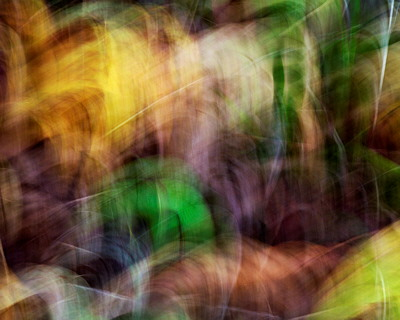 Abstract photo of the first autumn colors