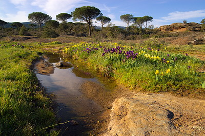 Provence springtime landscape