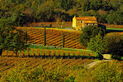 Bastide in provence vineyard