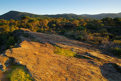 Evening light on La Plaine des Maures