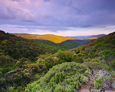Dawn on the forest of the Massif des Maures - Provence