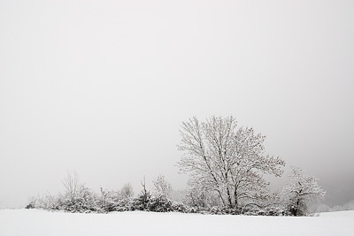 White landscape in the mist