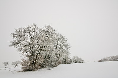 Trees in the mist and snow