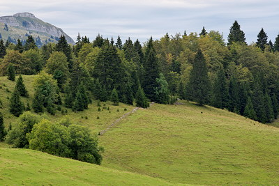 Photograph of the meadows and mountain forest of Bellecombe plateau in Haut Jura Natural Park