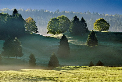 Landscape photograph in Haut Jura Natural Park by a misty morning