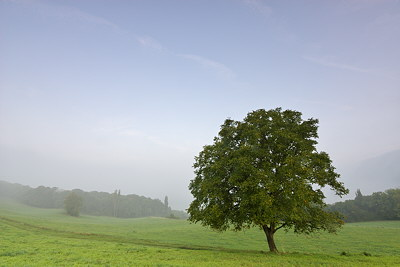 Photograph of a lonely tree in a misty rural landscape