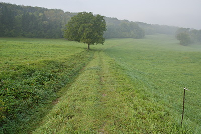 Photo of a rural landscape in the misty morning of an autumn day
