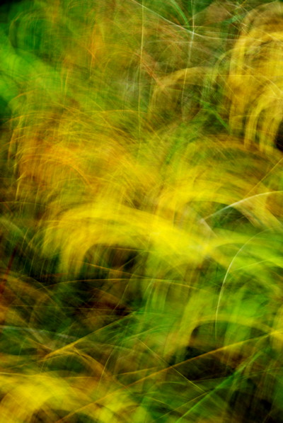 Abstract photograph of some colorful autumn grasses blended by camera movements during the exposure