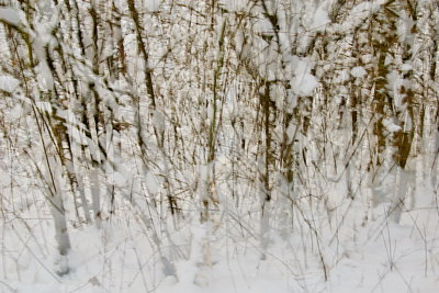 Abstract image of winter trees and branches in the snow