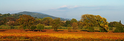 Autumn colors in Provence vineyard