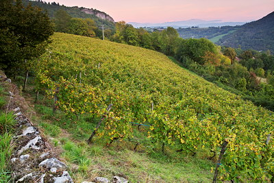 Photo of the french vineyard under dusk light in autumn