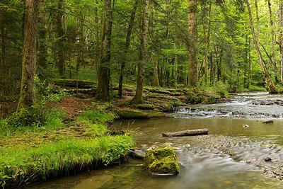Hérisson river through Jura forest