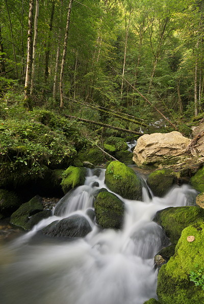 Image of a little stream cascading in the forest of Haut Jura Natural Park