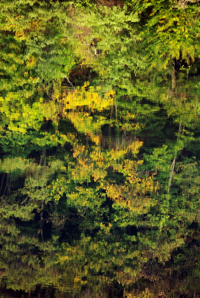 Photo of autumn colours reflected in the water of the Rhône river