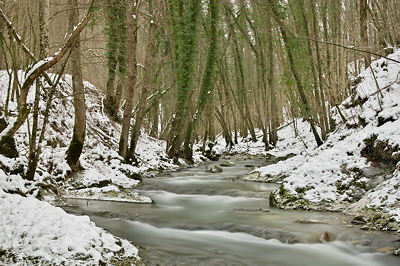 Photo of Fornant river in winter with the banks covered by snow