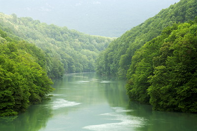 Image of the Rhône river running through a springtime forest in France