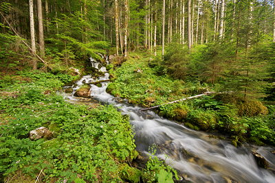 Photo of a springtime stream running through the forest of Haut Jura Natural Park in France