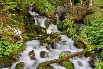Photo of a springtime waterfall in Valserine forest