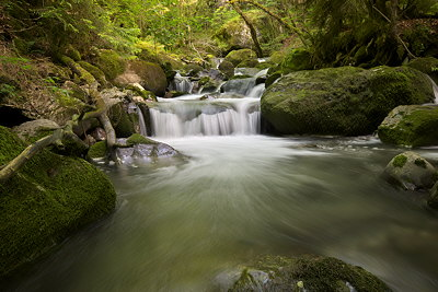 Photo of Bronze river cascading under woods in Massif des Bornes - France