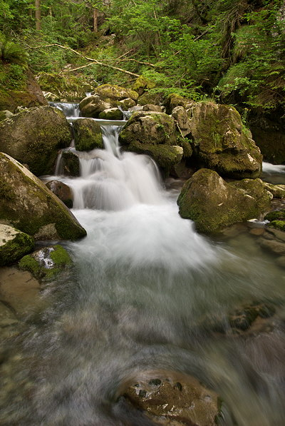 Photo of Bronze river cascading underwoods in the forest of Massif des Bornes - France