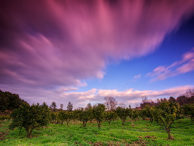 Magic light over the orchard