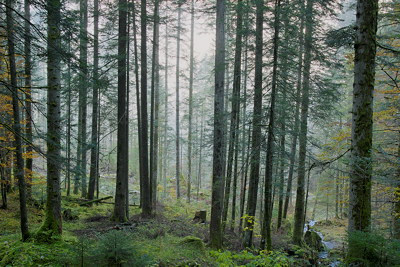 HDR photograph of a misty morning in Valserine forest