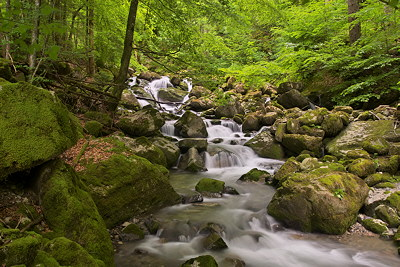 Photo of the Bronze river cascading through the forest in Massif des Bornes