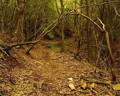 Wild forest path